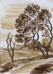 The Danger tree, Beumont-Hamel