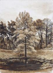 Tree, Caterpillar Crater