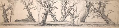 Sutor trees II, Sweet chestnut