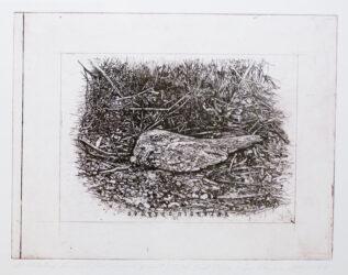 Bimblebox birds – Jill Sampson project (2nd State)
