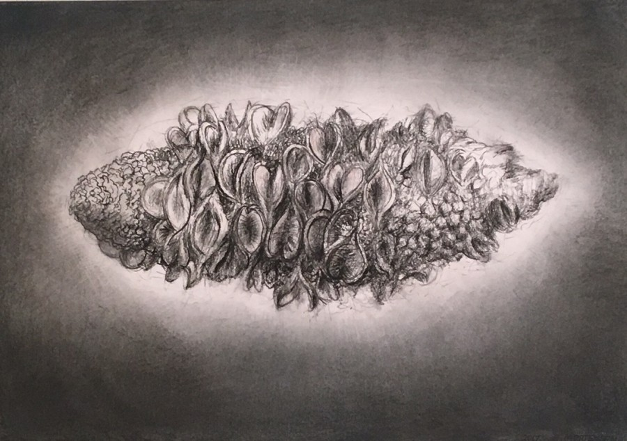 Banksia cone