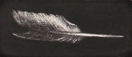Feather #49
