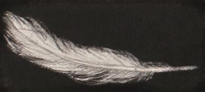 Feather #55