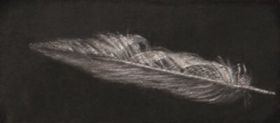 Feather #56