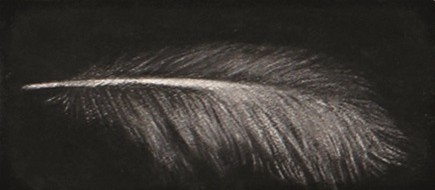 Feather #58