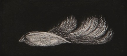 Feather #60
