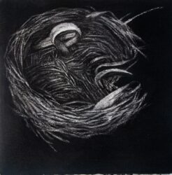 Nest #8