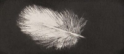 Feather #37