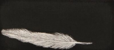 Feather #41