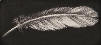 Feather #50
