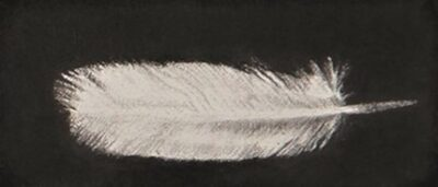 Feather #51