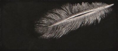 Feather #53