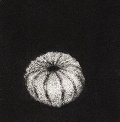 Urchin #5
