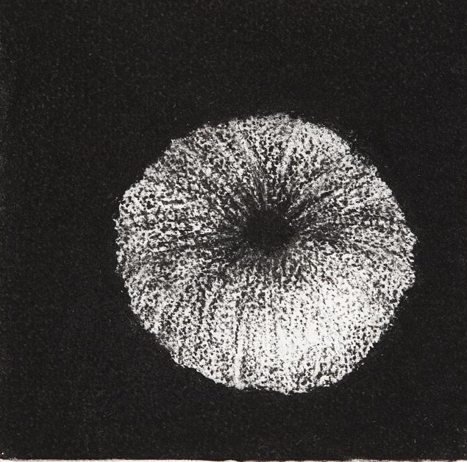 Urchin #6