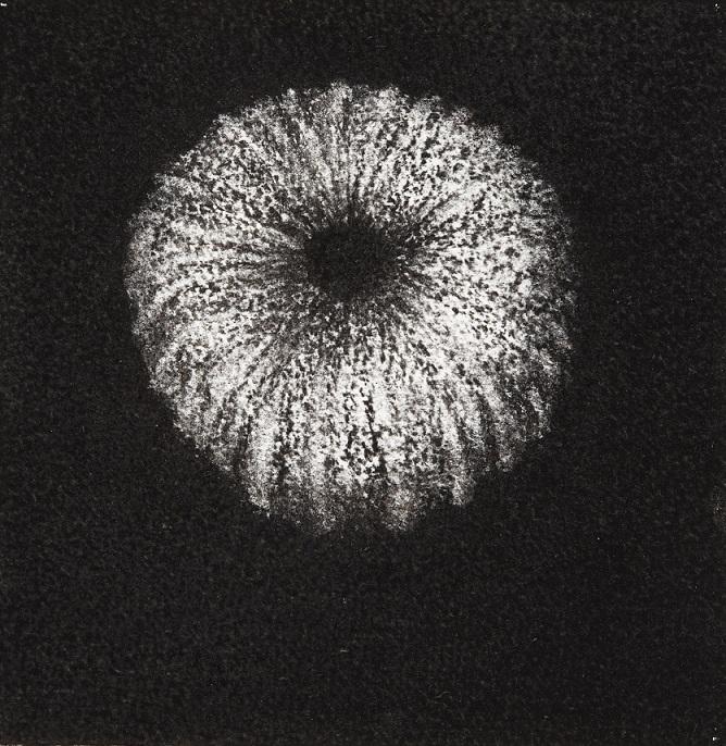 Urchin #11