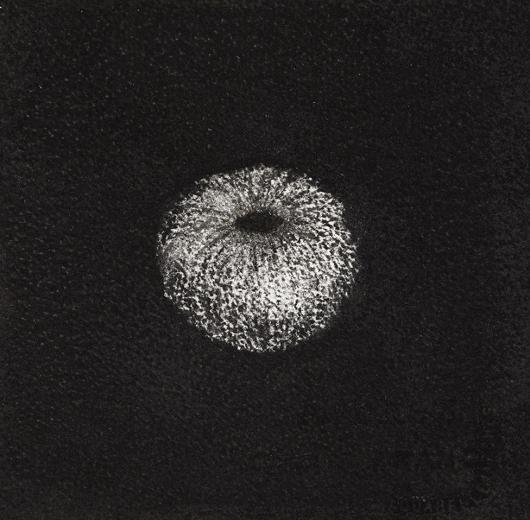 Urchin #13