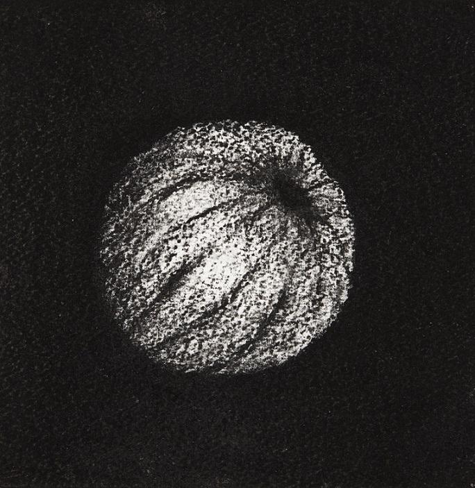 Urchin #15