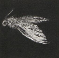 Moth #7