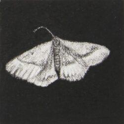 Moth #4