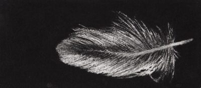 Feather #21