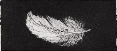 Feather #26