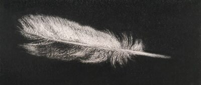 Feather #8