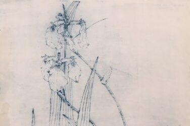 Diagonal Mar Iris series, Composition I