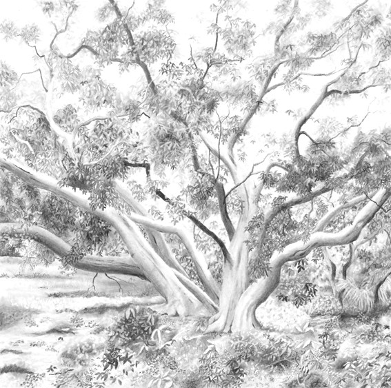 The birdwood