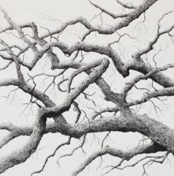 Boughs of oak