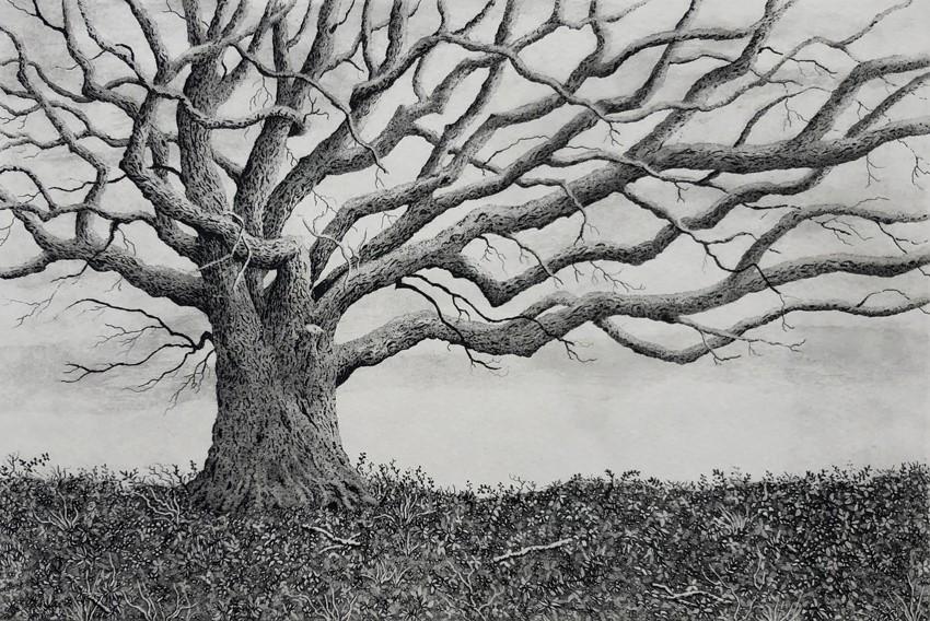 The oak on the barrow