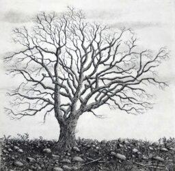Tree series II