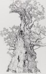 Squat Cadzow Oak