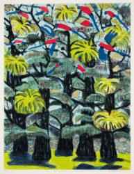 Tree-top Rosellas
