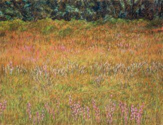 Straddie landscape no. 9