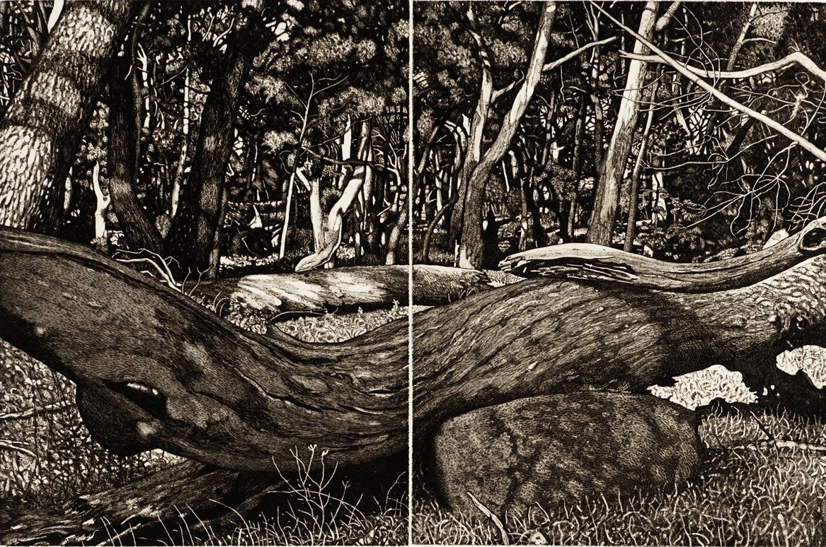 The Tangled Wood (composition VII)