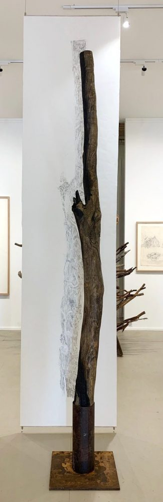 Yellow gum tree trunk from Maiden Gully with suspended drawing