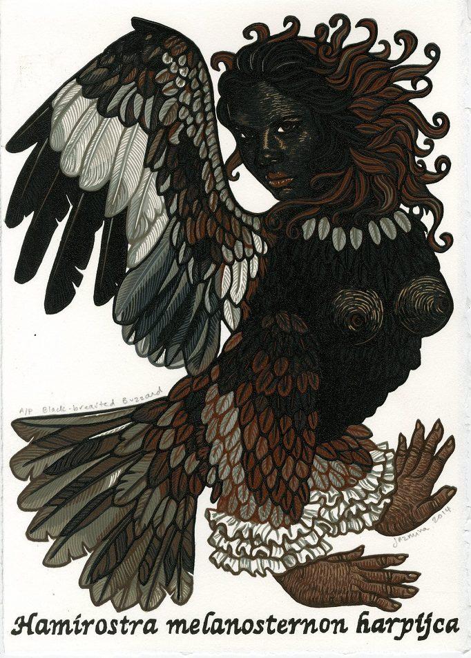 Black-brested Buzzard
