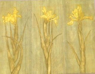 Large iris yellow