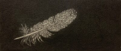 Feather #42A