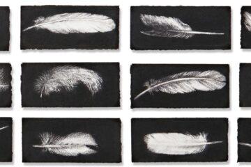 Jennifer Keeler-Milne – Drawing Workshop on Lord Howe Island