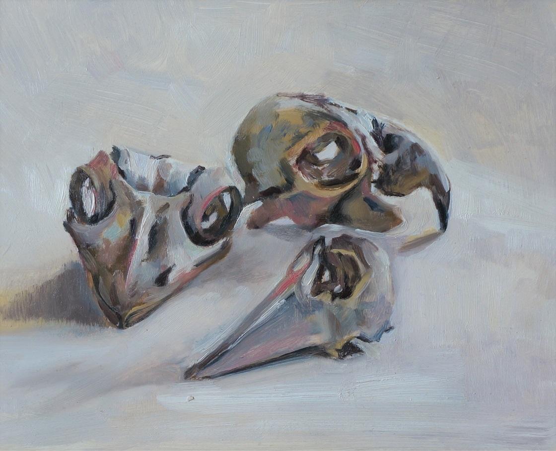 Native bird skulls