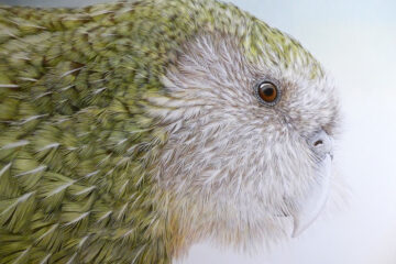 Janet Luxton – Highly Commended in the 2020 Wildlife Artist of the Year