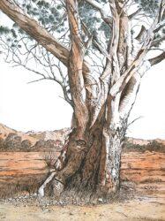 Old Tree, Flinders Ranges