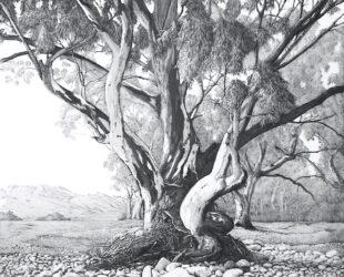 River Bed, Flinders Ranges