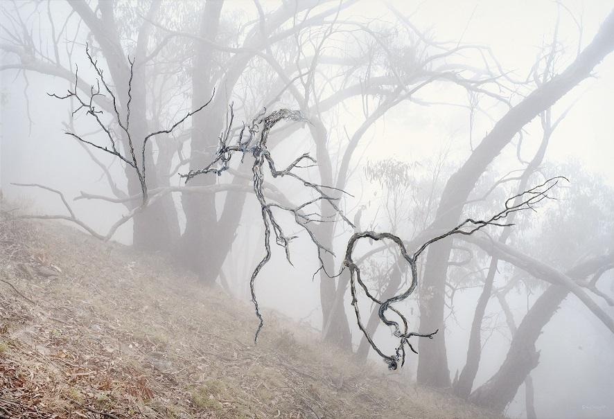 Eucalyptus Eulogy