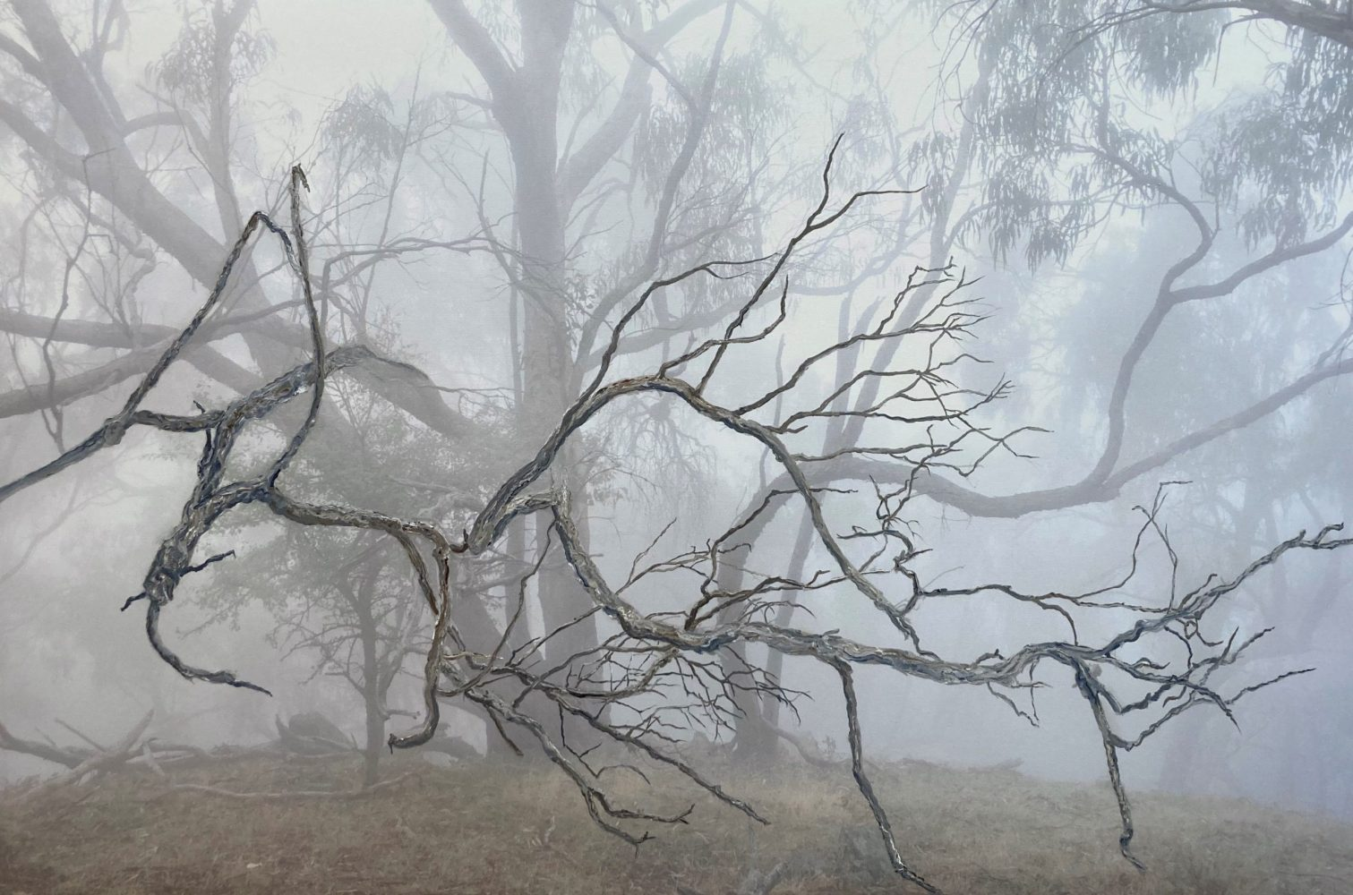 Eucalyptus Eulogy 2