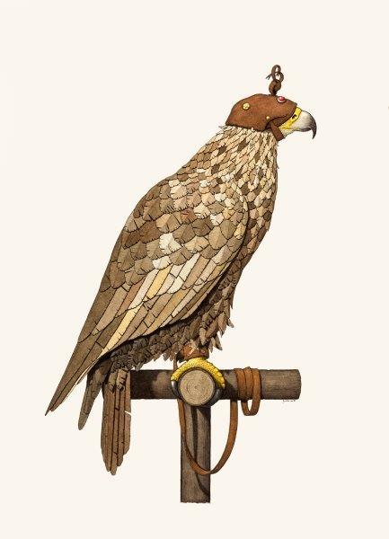 The berkut eagle