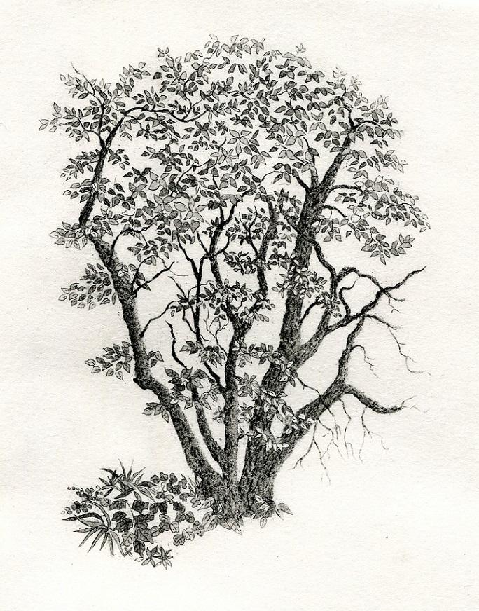 Lowy's tree
