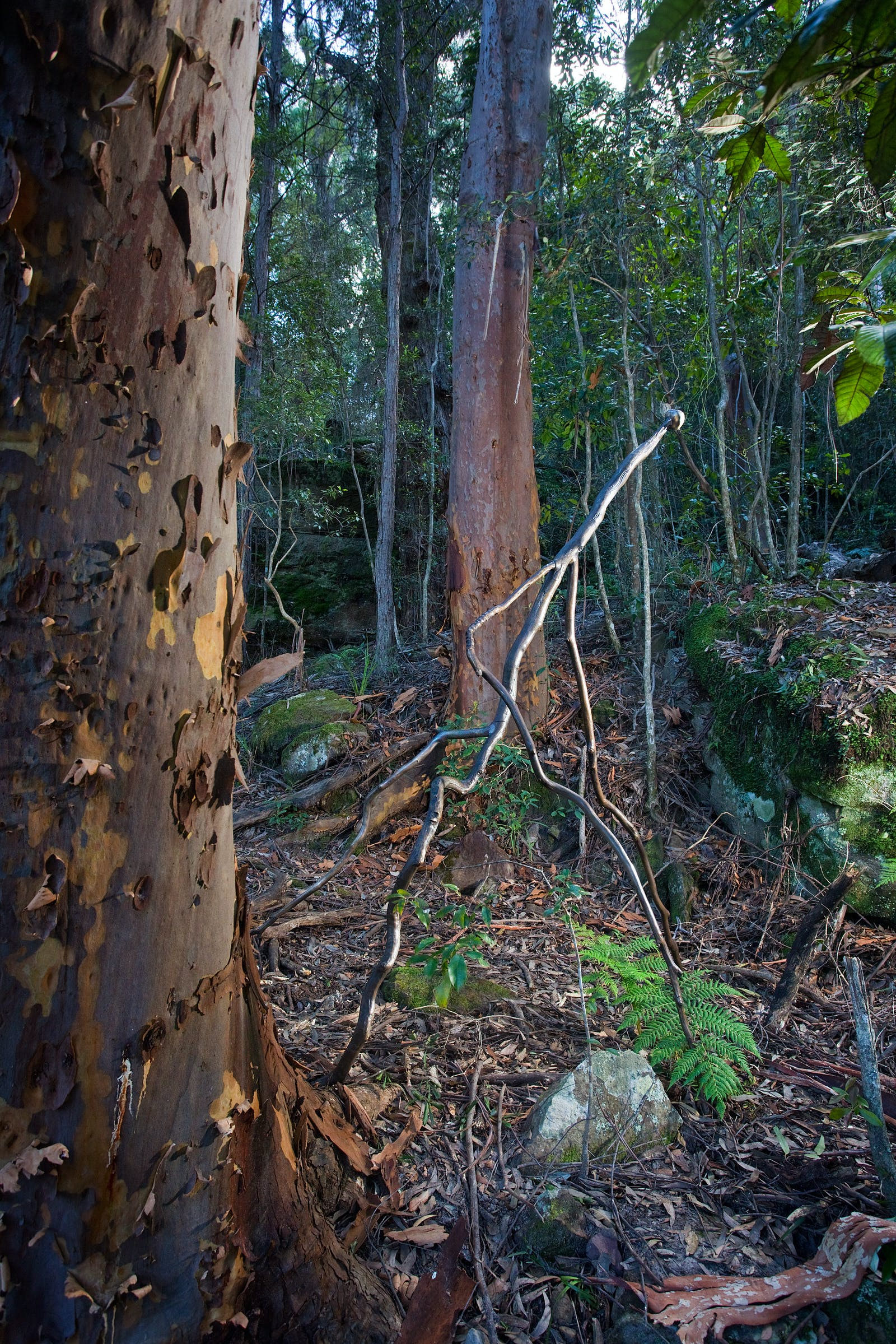 Camie Lyons – Winner of 2021 Sculpture at Scenic World Award