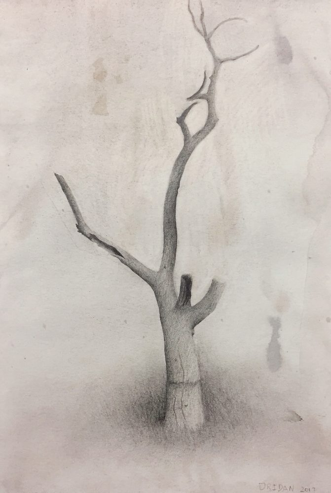 Dead tree I